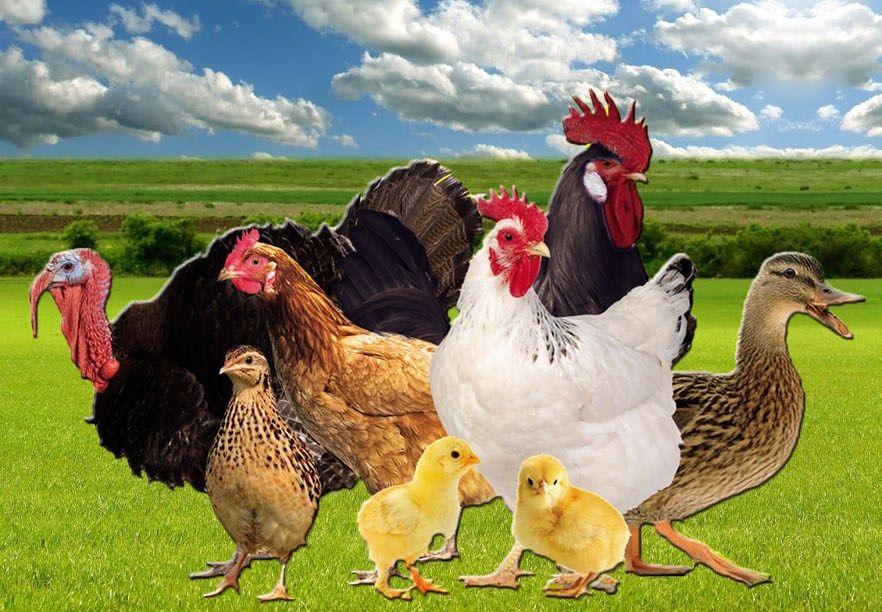 antibioticos avindustrias