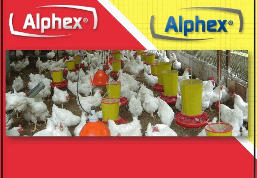 Equipo pollos gallinas avindustrias